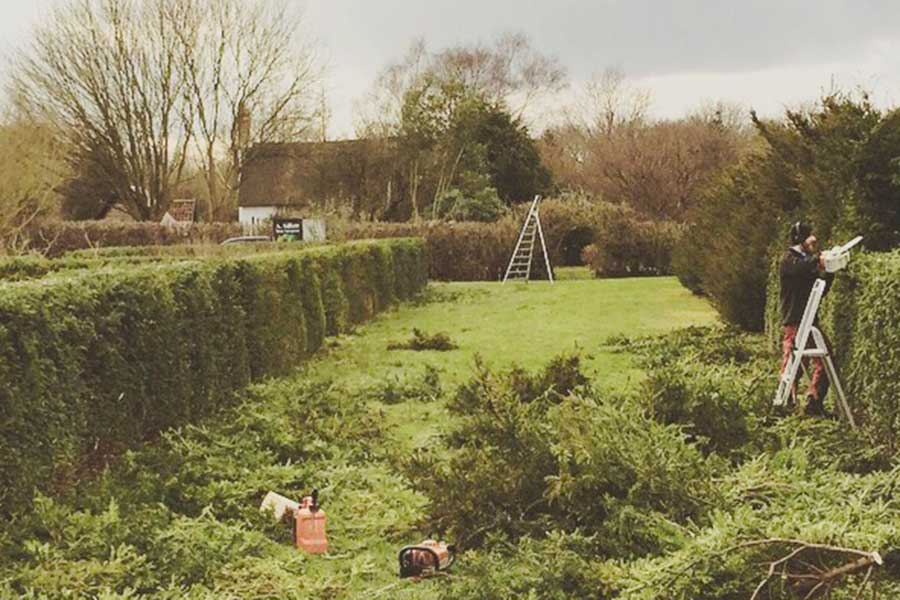 Hedge reduction in Norfolk