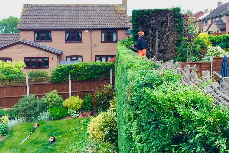 Hedge reduction in Suffolk