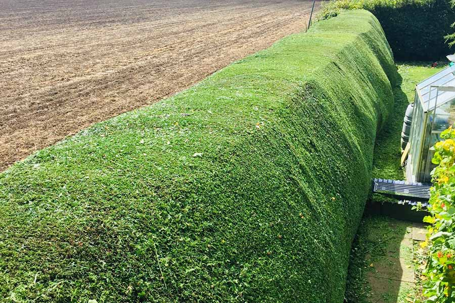 Hedge Trimming in Suffolk