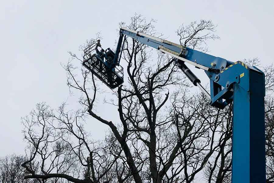 Suffolk tree surgery crown reduction