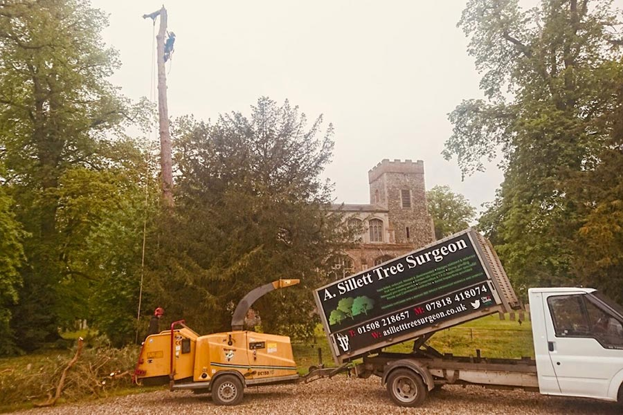 Suffolk tree felling and surgery