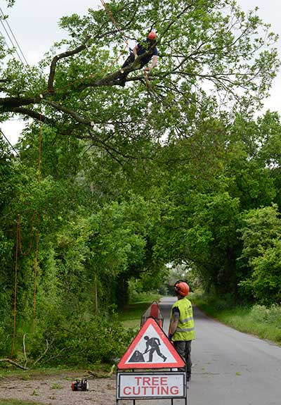 Tree surgeon in South Norfolk
